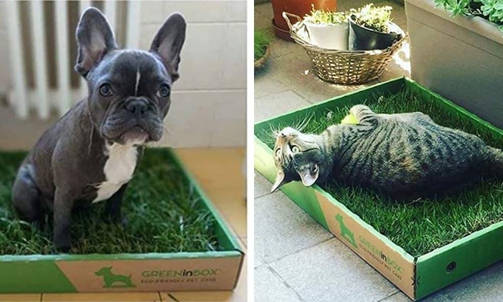 greeninbox